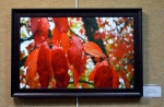 Photography on Giclee canvas