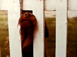 Nosey photo by Jan Skipo