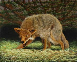 """Cornered Coyote,"" acrylic on canvas, by Monty ""Indiana"" Jones of Terre Haute"