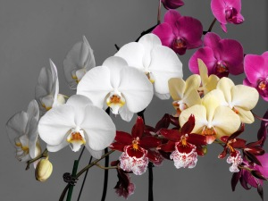 Orchids by Spencer Young