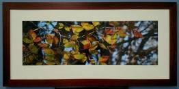 Autumn Beech by Todd Stokes